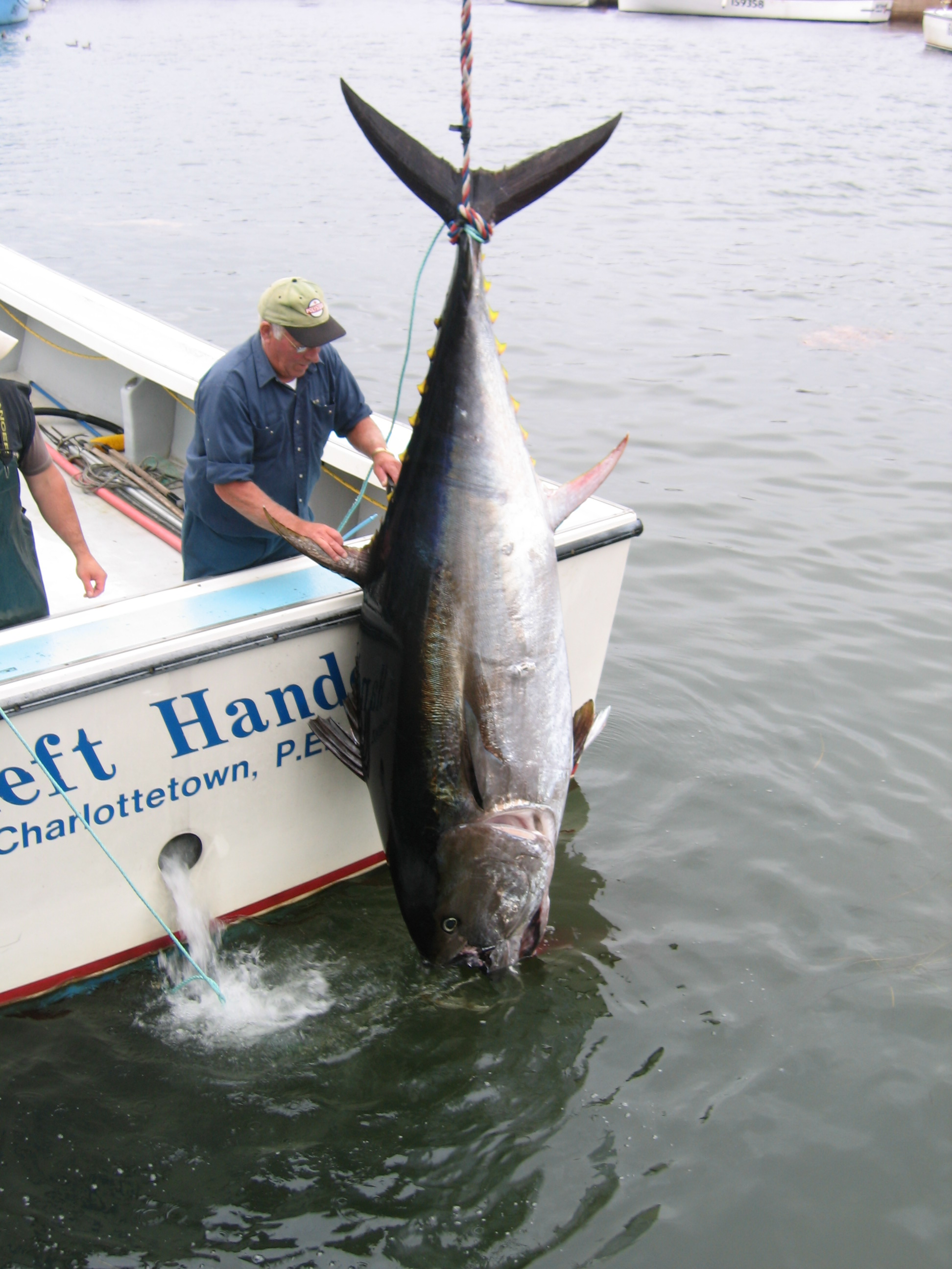Bluefin Tuna Fishing Tours PEI
